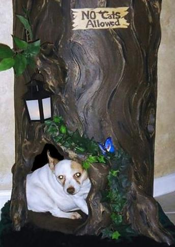 Unique Dog House