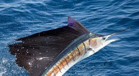 Boynton beach fishing charter for Delray beach fishing charters