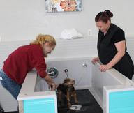 Dtails pet salon lodi ca pet grooming solutioingenieria Images