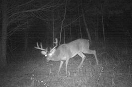 Kentucky deer season
