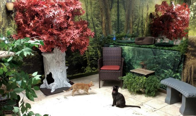 Charming Cat Cafes Godswood Room with Weirwood Tree