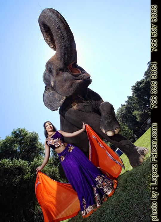 QUINCES PHOTOGRAPHY MIAMI ELEPHANT ELEFANTE INDIA INDIAN BOLLYWOOD PHOTO SHOOT VIDEO