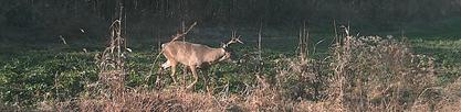 ky trophy whitetail