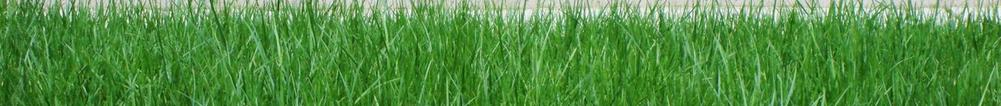 California Turf & Landscaping: Landscapers and landscaping design company - picture of grass