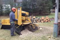 Stump Grinding Simsbury CT