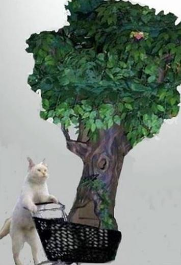 Fantasy Cat Trees