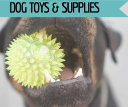 Dog toys & supplies at Golf Rose Pet Store | Golf Rose Animal Services