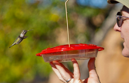 Feeding a Hummingbird by hand - Paul W. Ennis - Patient Advocate Navigator - Sonoma County, CA USA