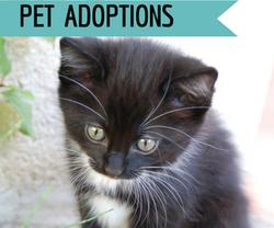 Pet adoptions at Golf Rose Pet Store | Golf Rose Animal Services