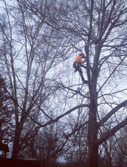 Tree Cutting grimsby, Storm damage clean up, residential tree service, arborist in tree