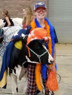 4-H Larimer Dairy Project Cow Costume