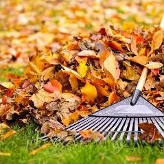 Richmond Mowing - Leaf Removal Lawn Care