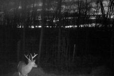 kentucky trophy deer