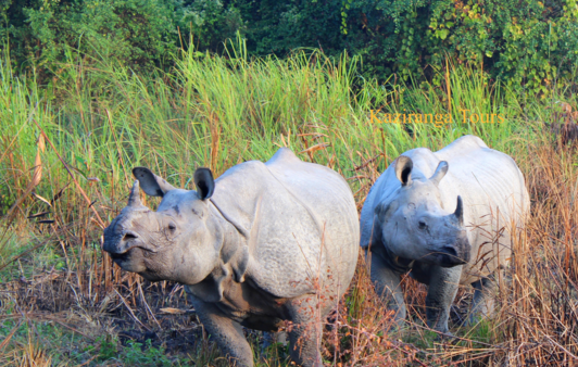 Kaziranga National Park Tour Package