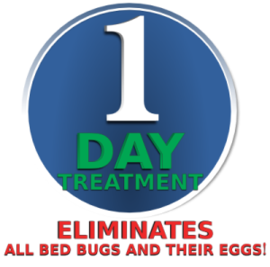 How To Get Rid Of Bed Bugs Bed Bug Exterminators Toronto Royal