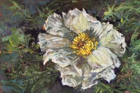 Lace and Thorns, miniature pastel painting Prickly Poppy by Lindy C Severns