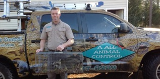 wildlife removal shepherdsville