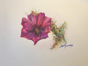 Cholla Bloom colored pencil drawing Lindy C Severns