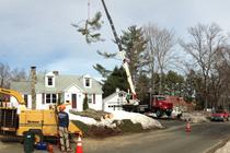 Tree Removal Farmington CT