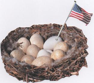 Swan's nest full of 8 brown veined and three white eggs. One egg photoshopped to have a flag coming out of a small hole in its shell.