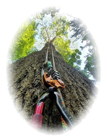 Local Tree Surgeon, Lichfield Tree Surgeon, Lichfield Tree Surgery