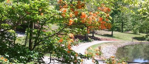 Long Ridge Campground, Hiawassee, GA
