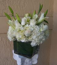 NB-6CTUL1 Tulips, Antique green hydrangea