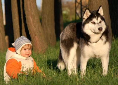Financing - Finance your Pomsky today, buy now and pay later