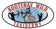 Kootenay Wild Taxidermy