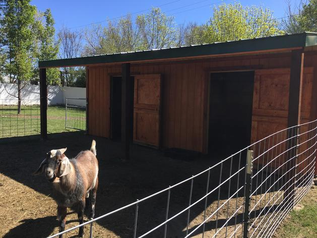 Goat Row barn with lean to