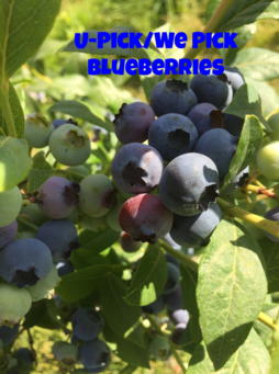 Now with Blueberries!