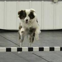 Events at Western Waukesha Dog Training Club