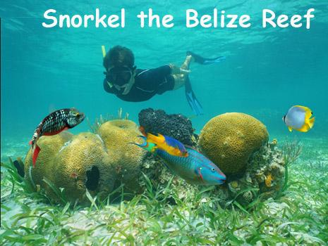 A boy snorkels at the Belize barrier reef. Book a Belize all inclusive vacation package today.