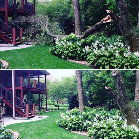 Before and after picture of storm damaged tree removal and tree clean up for a customer in Omaha NE