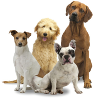 How to become a member at Western Waukesha Dog Training Club