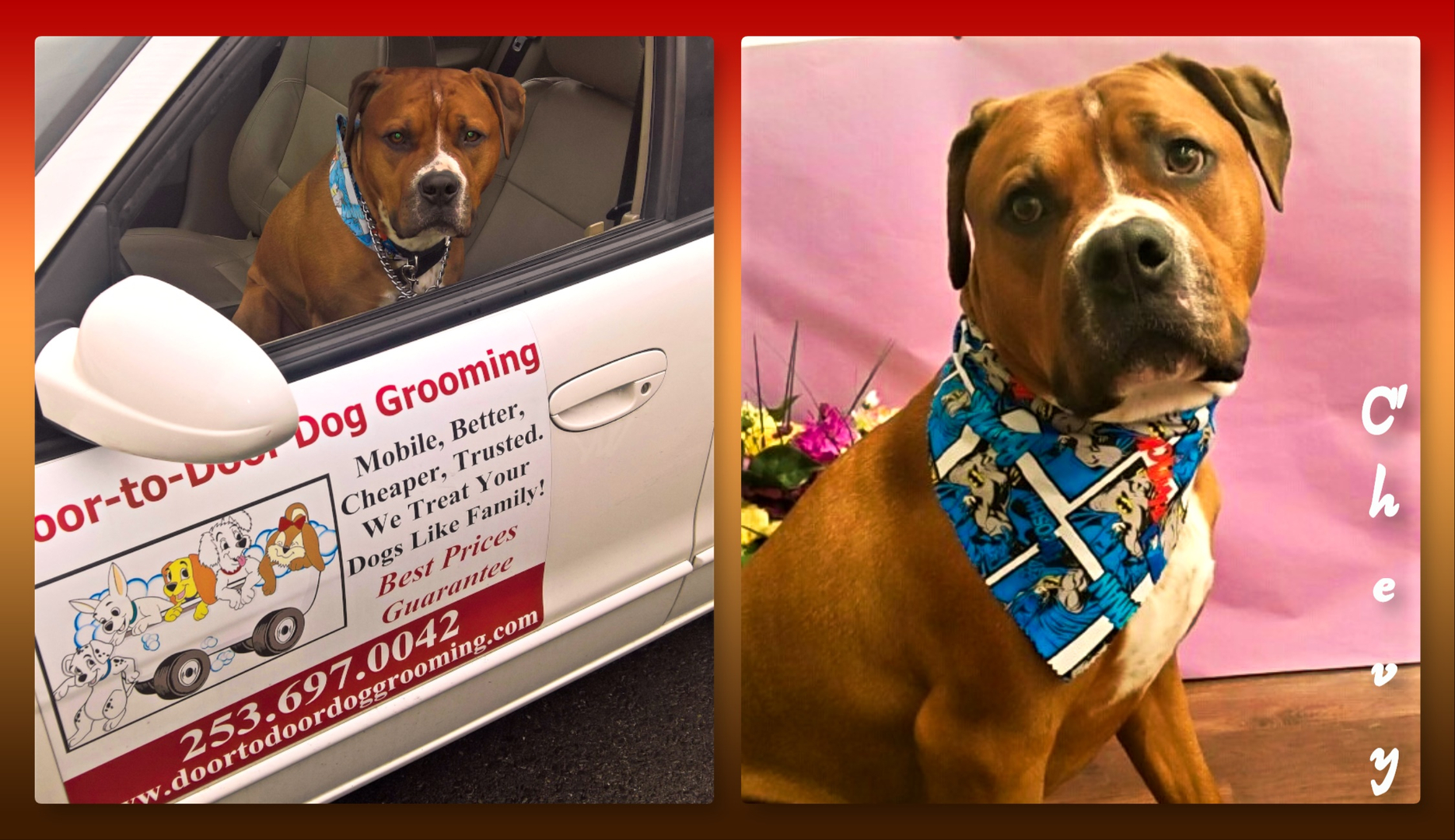 Discount Mobile Dog Grooming Puyallup Tacoma Auburn Beyond