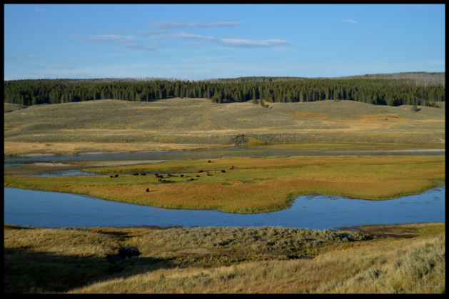 golden field with stream yellowstone national park