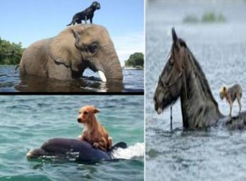 Watch: Heroic Animals Rescuing Humans and Animals