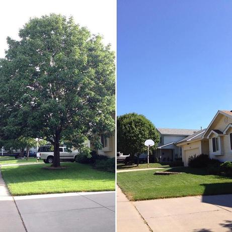 A before and after picture of the tree removal for a customer in Omaha NE