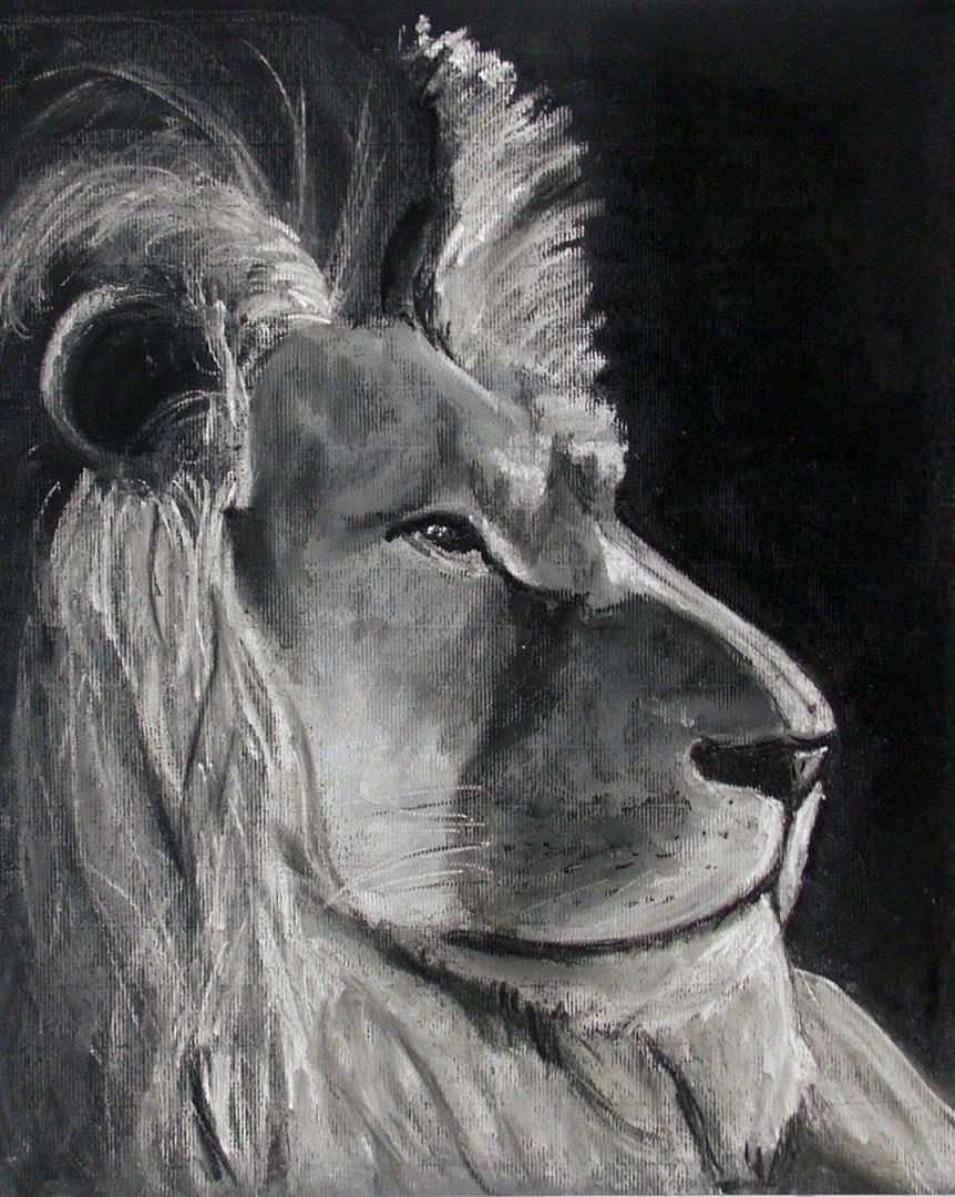 Animal portraits drawings