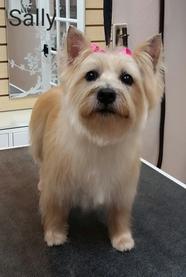 Dandys pet grooming st petersburg fl dandy dog wash brush solutioingenieria Images