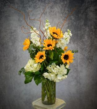Vase arrangement designed in a cylinder vase with sunflowers, snapdragons, hydrangea, curly willow, and a variety of foliage.