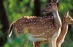 Chinnar wild life sanctuary