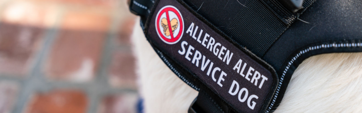 Gluten detection service dogs for those with Celiac or Anaphylaxis to gluten