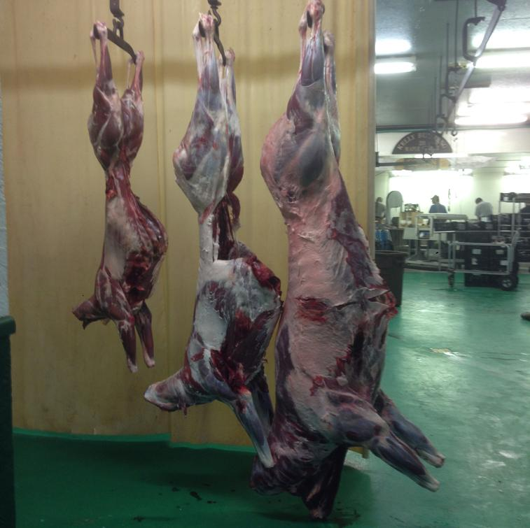 Large Deer Processing: Field Dressed weight: 146 to 189 lbs add $25.00 * 190 lbs and above add $50.00