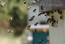 Bee Removal Services in Chula Vista