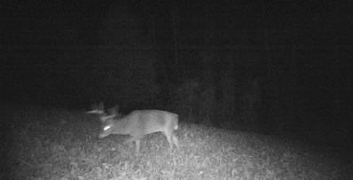 kentucky deer hunting trips