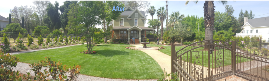 Complete Yard Redo After