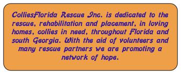 ColliesFlorida Rescue - online