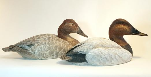 Canvasback Drake and Hen
